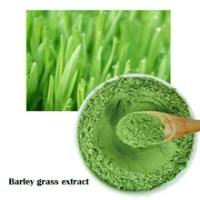 100% Pure Organic Natural barley grass Barley seedling Extract Powder,Intestinal regulation 500g