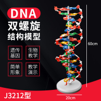 DNA雙螺旋結構模型大號高中分子結構模型60cmJ33306脫氧核苷酸鏈堿基對遺傳基因染色體雙鏈生物科學教學儀器