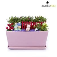 迎春納福~居家、送禮擺飾精選~羅漢松創意組合盆景(粉紅槽盆)