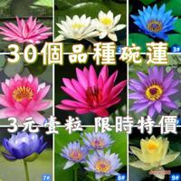 荷花 蓮花 種子 【3元一粒】【每個品種5粒起發貨】30個品種 荷花 蓮花種子 新店促銷 限時特價