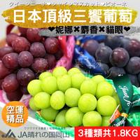 (現貨免運)【綠之果物】三色葡萄 日本葡萄 葡萄禮盒 無籽葡萄 麝香葡萄 貓眼葡萄 妮娜葡萄