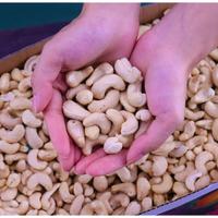 新貨越南生腰果仁原味500g原裝進口5斤整箱散裝稱斤堅果零食
